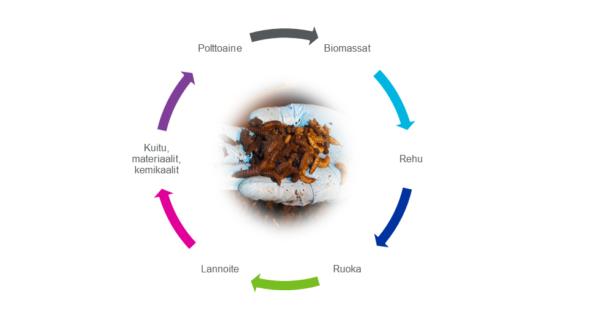 Hyönteiset Biomassa - Rehu - Ruoka - Lannoite - Kuitu - Polttoaine -kierrossa